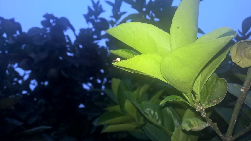 Leaf Plant Nature Green Color No People Growth Close-up One Animal Beauty In Nature