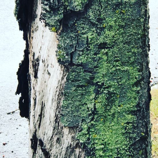 Tree Trunk Tree Textured  Bark Growth Nature Green Color Non-urban Scene Tranquility Weathered No People Scenics Full Frame Tranquil Scene Solitude Beauty In Nature