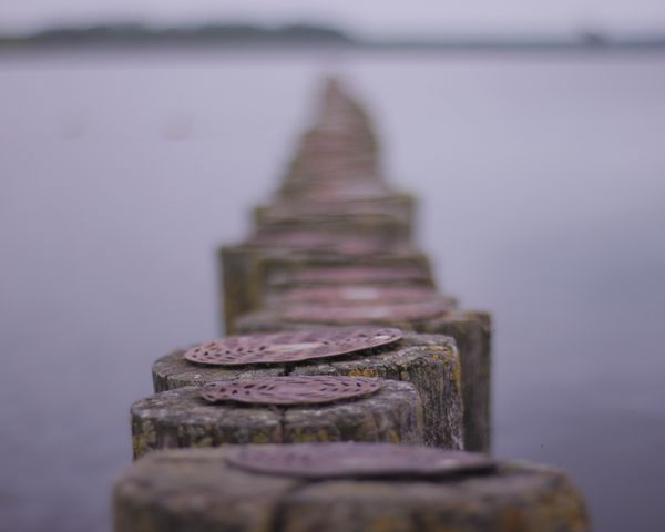 shallow Buhnen Shore Purple EyeEm Best Shots EyeEmNewHere Canon Sea Lake Netherlands Shallow Depth Of Field Bokeh Religion Spirituality Water No People Outdoors Landscape Architecture Day Close-up