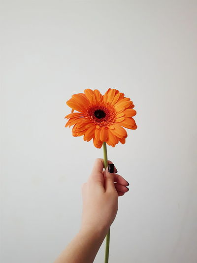 Cropped image of hand holding orange flower