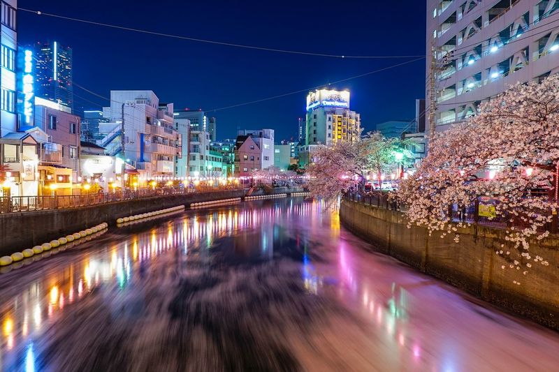 Midnight sakura with a river that full of sakura petals Night Sakura Midnight Blossom Sakura Built Structure Architecture Building Exterior City Illuminated Night Water River Cityscape Outdoors Reflection Building Nature Residential District No People City Life