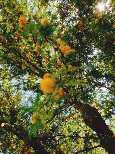 Tree Nature Orange Color Growth