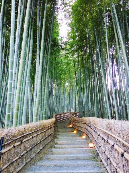 Endless Stairs Endless Way 屋外階段 無限の階段 Kyoto Arashiyama Stairs Achievements Light Through The Trees Freshness Green Clean Forest 今後の方法 Path Way Through Forest Lighted Way 森を通る道 Bamboo Fence 竹の森 Japanese Bamboo Bamboo Grove Day Bamboo - Plant Outdoors Nature The Way Forward No People Tree Beauty In Nature Growth