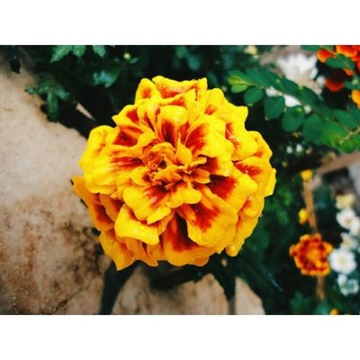 ▪ Vscocam ▪ VSCO ▪ Vscobrasil ▪ Vscofocus ▪ photoftheday ▪ instadaily ▪ flowers ▪ colors