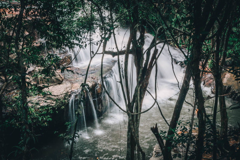 Beauty In Nature Branch Day Flowing Flowing Water Forest Growth Land Motion Nature No People Non-urban Scene Outdoors Plant Power In Nature River Scenics - Nature Tranquil Scene Tranquility Tree Water