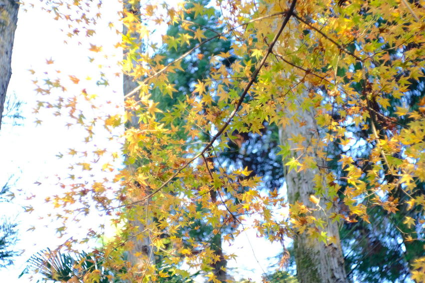 『15:57:52』 2016-12-02 Tree Nature Low Angle View Growth No People Beauty In Nature Branch Day Leaf Outdoors Autumn Sky Fragility Beauty In Nature Winter Yellow Beauty Hello Word Low Angle View Nature Tree Scenics Autumn Growth