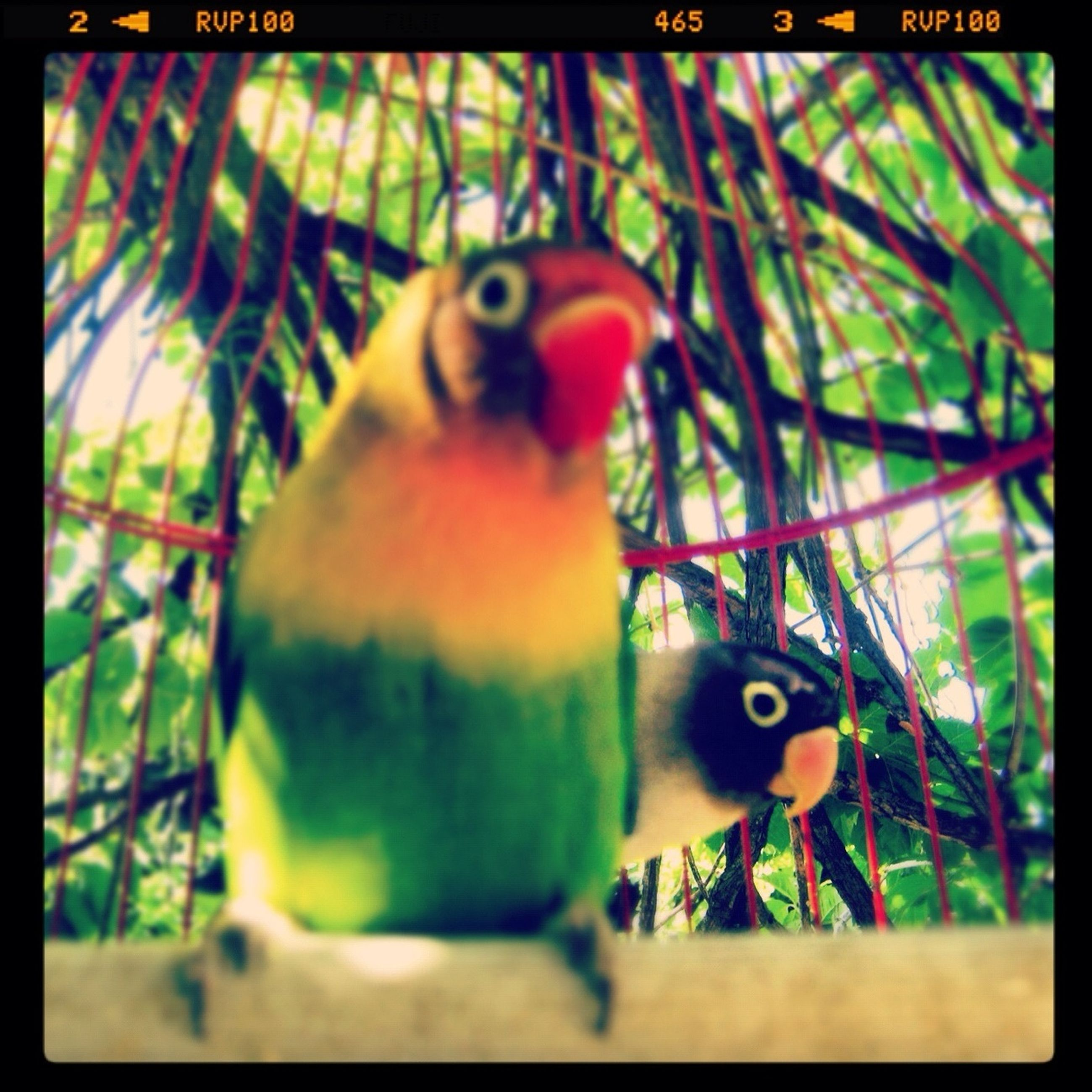 animal themes, transfer print, one animal, auto post production filter, wildlife, animals in the wild, bird, focus on foreground, branch, close-up, tree, portrait, selective focus, looking at camera, parrot, perching, day, animal head, nature, no people