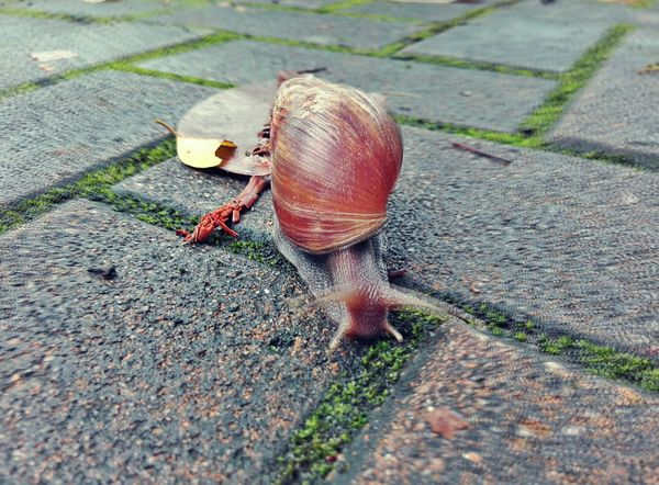 a Drunk Snail Nature_collection Nature Photography EyeEm Nature Lover Check This Out FUNNY ANIMALS Relaxing Enjoying Life