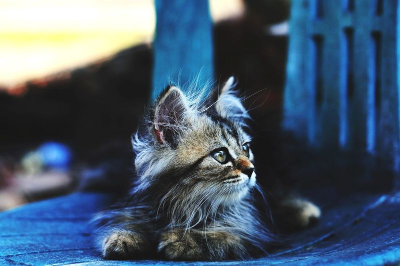 Animal Themes Persian Cat  Cat Lovers Cats Of EyeEm Cats 🐱 Kitten Kitten 🐱 Macro Close-up Animal Eye Yellow Eyes Animal Head  Cat Eye Animal Nose Whisker