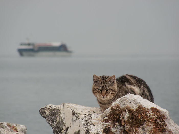 Animal Themes Backgrounds Boat Cat Cat On Rock Cliff Day Domestic Cat Feline Lake No People One Animal Outdoors Relaxing Rock Sea Sea And Sky Ship Sky Tranquillity Wild Wild Cat