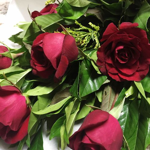 Roses are really pleasing to the eyes. 😍 Flower Leaf Freshness Beauty In Nature Petal Nature Roses Are Red Roses Roses🌹