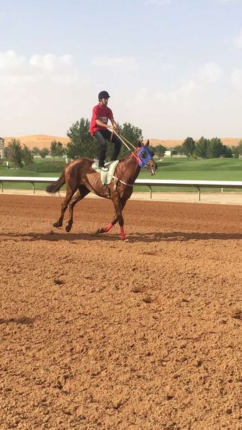 Horselife Horses_of_instagram Horse Life Horse Jumping Horse Racing Horse Photography  Riyadh KSA Horsesofinstagram KSA
