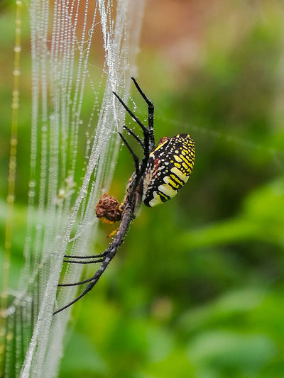 Spider and net Insect Spider Web Spider Animal Leg Close-up Animal Themes Butterfly - Insect Jumping Spider Animal Markings