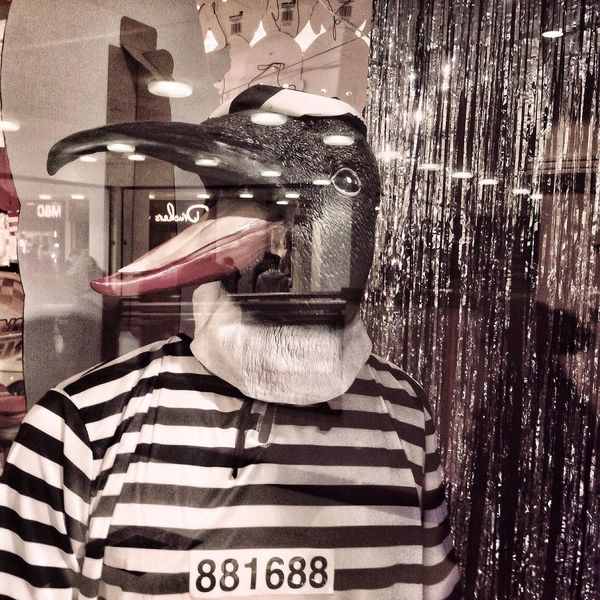 Jail Bird Hipstamatic Snapseed Lynchian