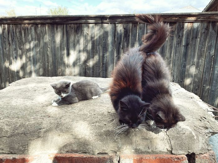 View of kittens relaxing outdoors