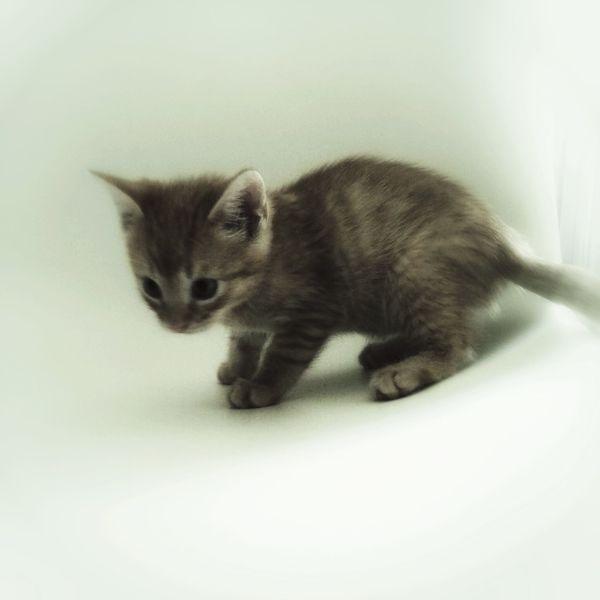 Shootermag Mycat Cat♡ NEM Black&white AMPt_community Cat Lovers Babycat