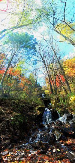 望天鹅 Nature Tree Beauty In Nature Forest Tranquility Tranquil Scene Rock - Object Scenics Outdoors No People Day Water Autumn River Moss Landscape Branch Sky
