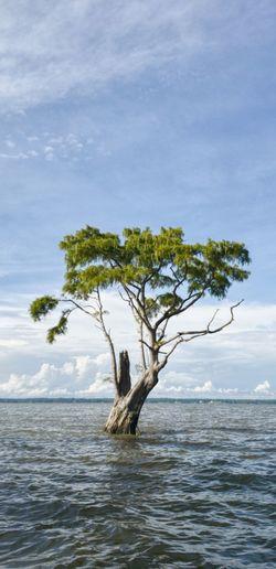 Dead tree on sea shore against sky
