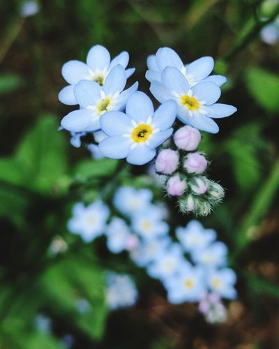 Daintyanddelicate Dainty Flowers Flower Plant Nature Close-up No People Fragility Beautiful Flowers Freshness Growth Plant Blossom Petal