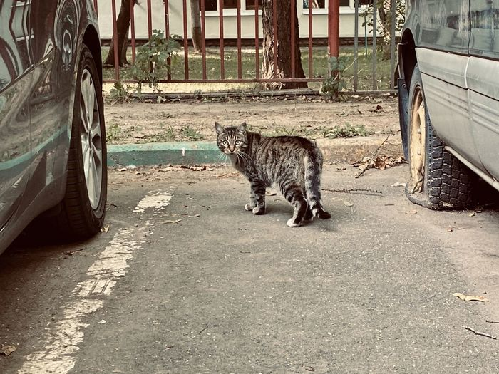 Full length of a cat