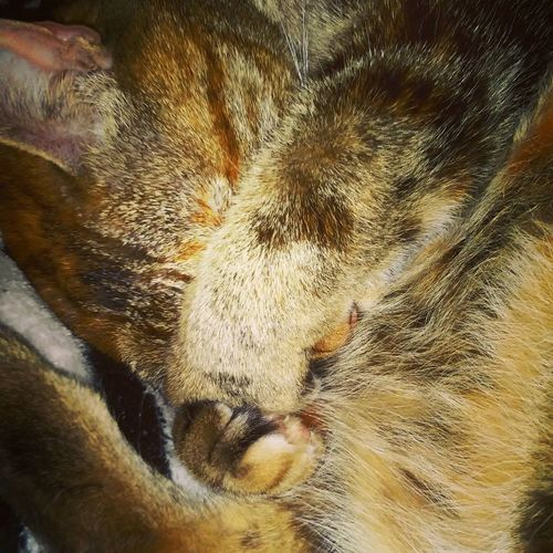 Cat Cats Tortoiseshell Cat Sheltercat AdoptDontShop Purrfect Meow Nap Catnap Slumber Shy Mycat Mybaby PrettyMomma