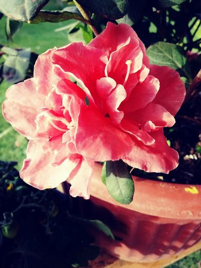 Nature Springtime Mobilephotography Naturaleza Flora Rosé Pink Flower Flower Rosa Rosada Flor Rosada Beauty In Nature