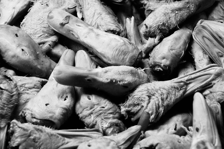 Crime Death Murder Animal Themes Black And White Blackandwhite Ducks Heads Sick EyeEmNewHere