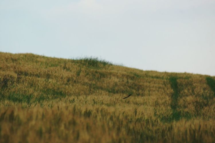Bird Marsh