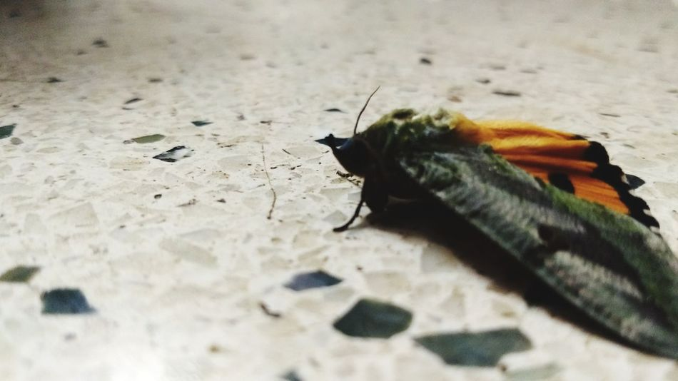 Moth Insect Animals In The Wild Animal Themes One Animal Animal Wildlife No People Day Outdoors Close-up Nature