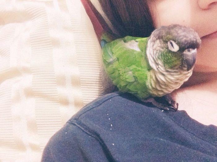 looks like someone's sleeply ? Animals Birds Greencheekconure
