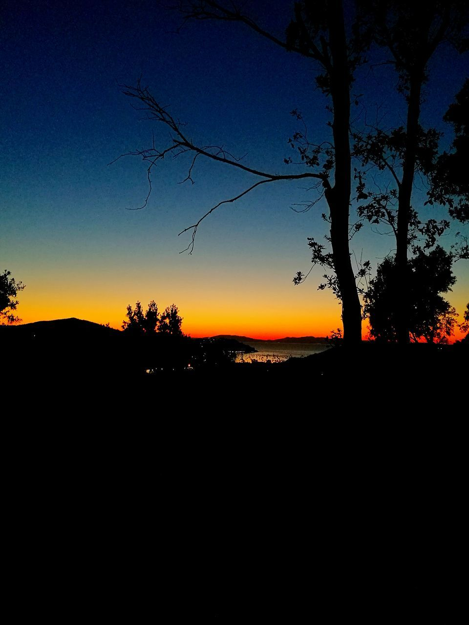 silhouette, tree, sunset, beauty in nature, dark, nature, landscape, scenics, tranquil scene, tranquility, sky, no people, outdoors, clear sky, branch, day