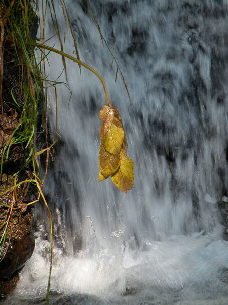 Beauty In Nature Catalonia Catalunya Growth Nature Pirynees Plant Val D'Aran Water Waterfall