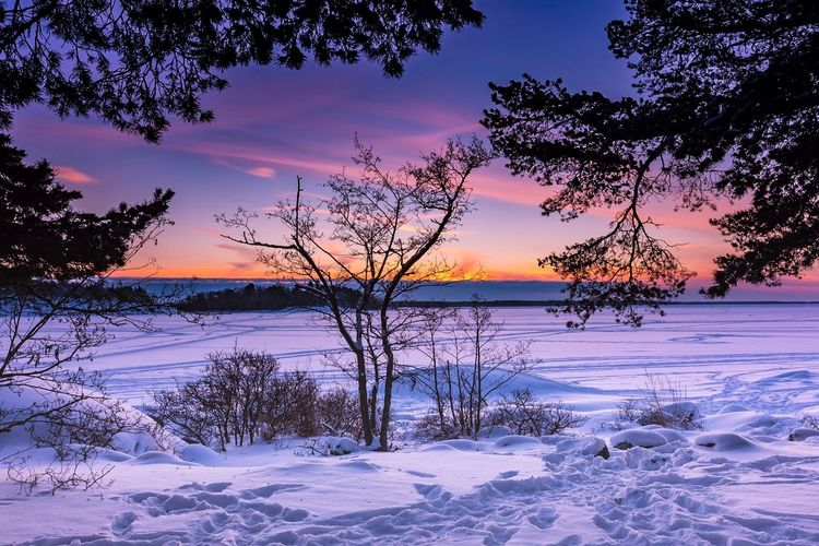 Scenic view of snow covered tree against sky during sunset