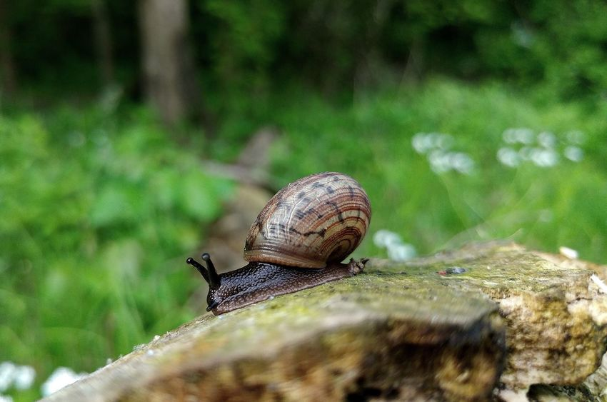Gastropod Check This Out Naturelovers Nature Photography Macro Photography Ohio Nature On Your Doorstep Nature Spring Insect Photography Snail Snails Snail🐌 Snail Collection Snailshell Snail Photography Green Grass Deadtree