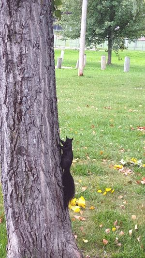 Squirrel just posed for the shot. 😂 Tree Leaves Tree Trunk Grass Beach Innisfilbeachpark Innisfil Ontario Canada Nature Photooftheday Art