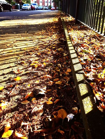 This Is Autumnday 4. Morning Sunshine Fence Shadows Crunchy Leaves Leaves Golden Light Perspective Autumn Footpath