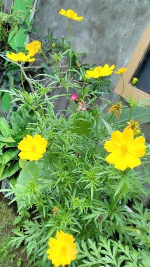 It's a beautiful yellow flower...😍😍😍😍😍😍😍