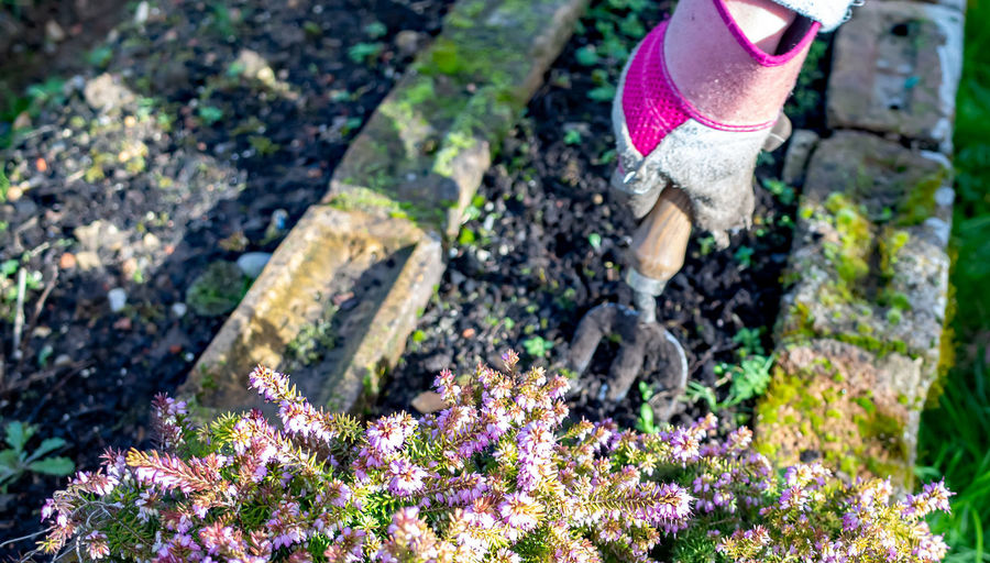 Low section of person on purple flowering plants