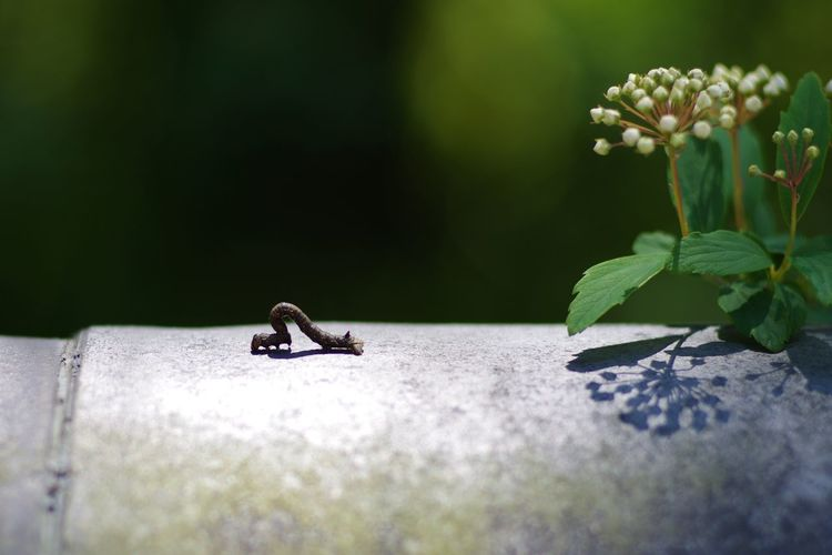 Animal Animal Themes Green Caterpillar Larva  Life Nature Shadow Silhouette