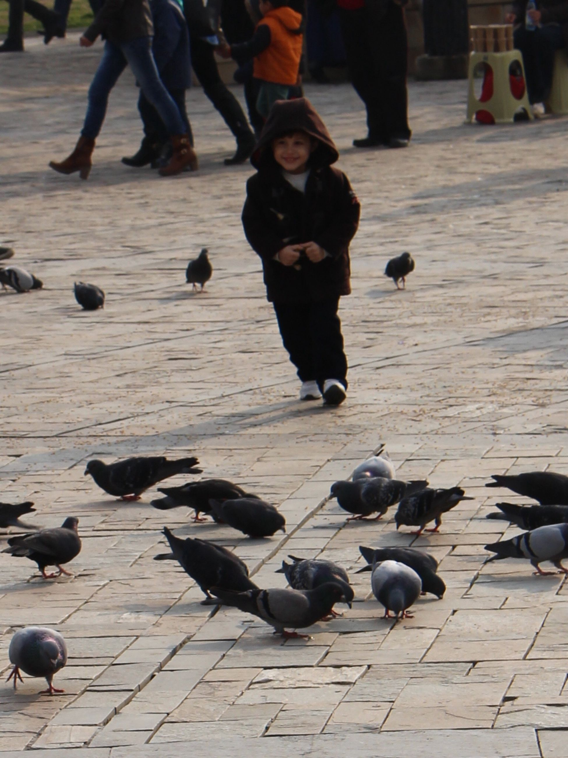 animal themes, bird, pigeon, animals in the wild, wildlife, person, street, lifestyles, togetherness, cobblestone, walking, men, large group of people, leisure activity, full length, flock of birds, outdoors, footpath