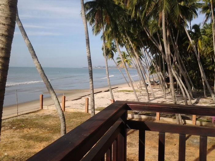Palmtrees Vietnam Muyne Chinese Sea