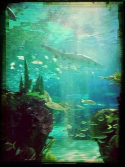 Fishhhyyyyy Hello Sea World Fish