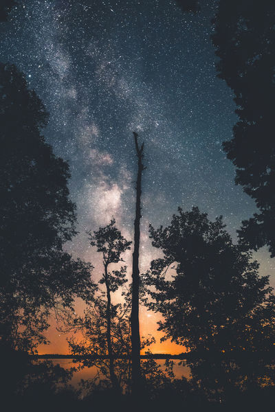 Broken dreams. Star - Space Night Sky Space Milky Way Astronomy Galaxy Constellation Backgrounds Tree Star Field Silhouette Sunset Scenics Full Frame No People Nature Beauty In Nature Outdoors Close-up Sweden Nature Clear Sky Sweden Reflection Galaxy