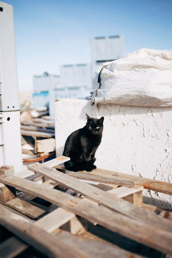 Close-up of black cat sitting on wood against sky