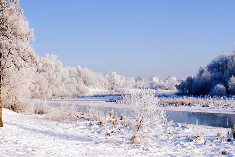 Minsk, Loshica Park Frozen Snow ❄ Winter Beauty In Nature Clear Sky Cold Cold Temperature Landscape Nature Outdoors