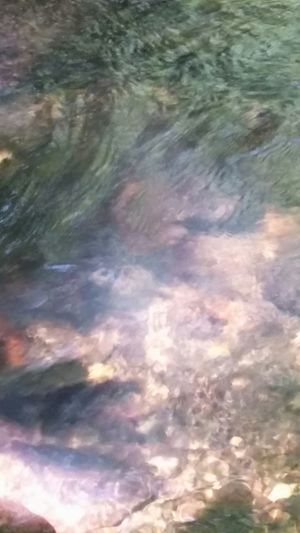 Check This Out Taking Photos Flowingwater Photography Flowing Stream Flowing Water Nature Photography Beauty In Nature Nature Up Close Hot Springs, Arkansas Arkansas One Of My Favorites I Really Like This Picture  A Little Blury