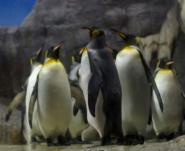 Close-up of penguins in aquarium