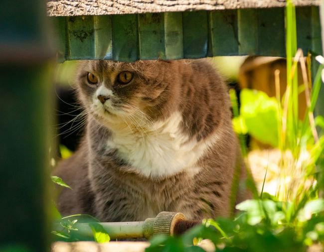 Close-up Cat Domestic Cat Leopard Big Cat