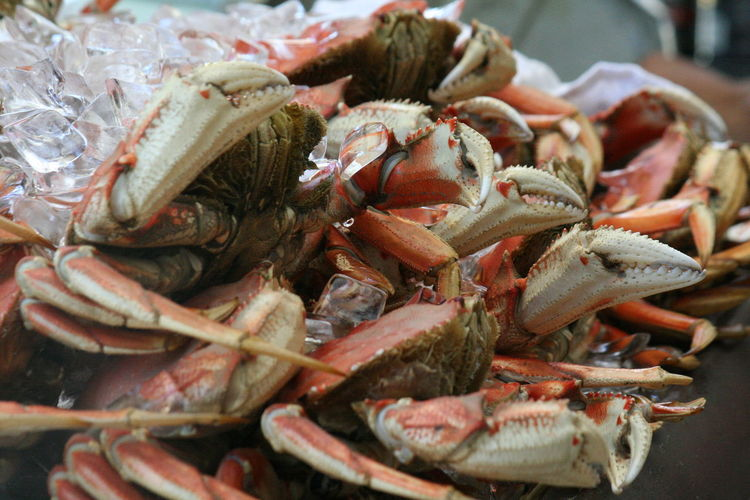 Close-up of crab in market