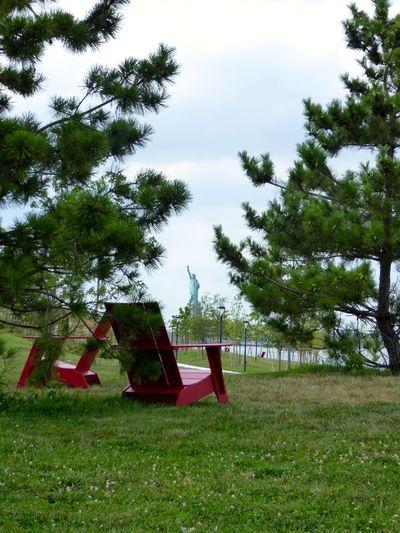Empty swing on grassy field against trees in park